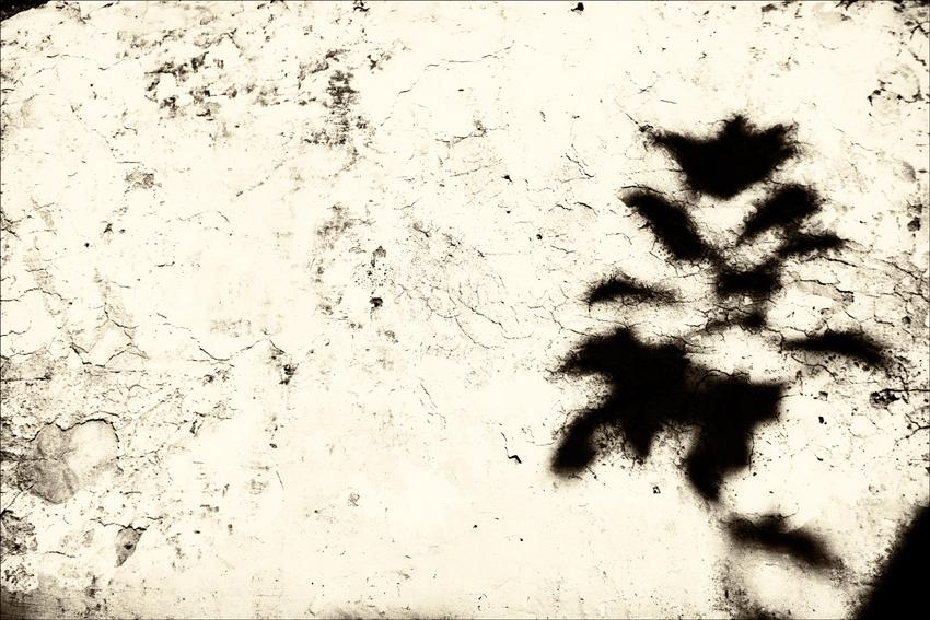 fotosensia-p.poiraudeau-0007
